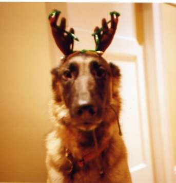 Christmas pooch