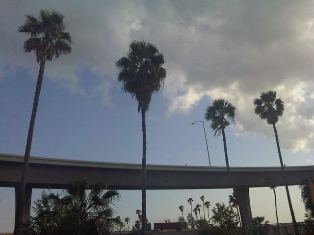 Freeway Palms