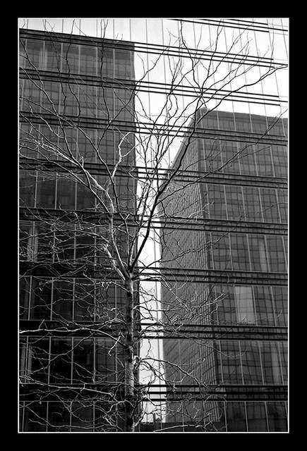 buildings and trees