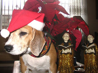 BARK! The Herald Angels Sing ...