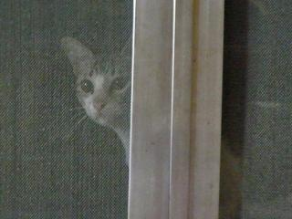 cat at my window