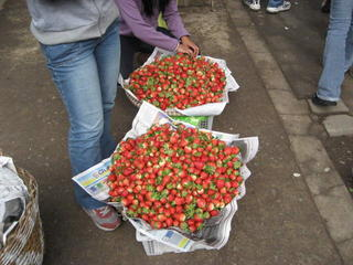 STRAWBERRIES AT BAGUIO CITY