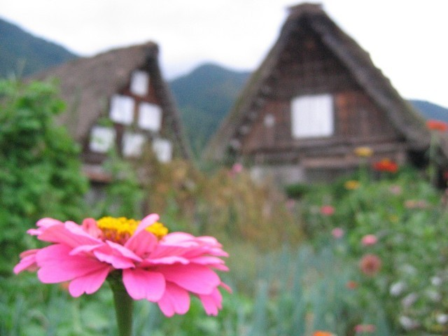 Shirakawa Flora 3