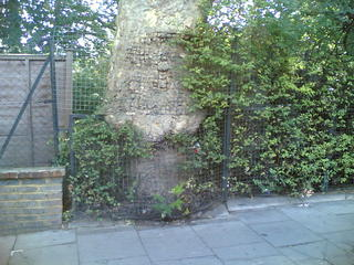 Fence eating tree