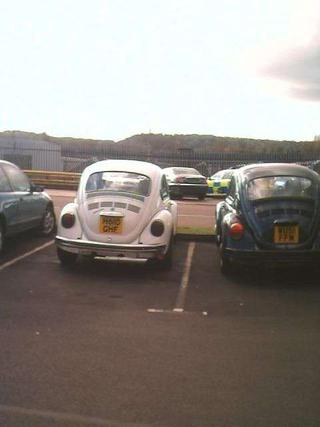 mine and dan's beetles