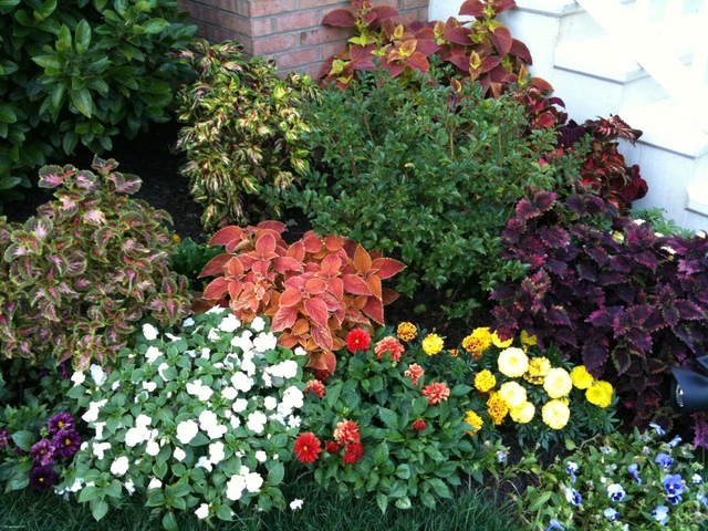 Coleus, marigolds, 2 year old pansies &amp; dailia